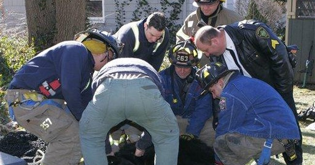 Agents catch darted black bear in Lakewood, Wash.