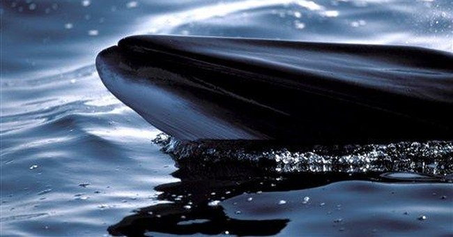 The Whale Oil Economy