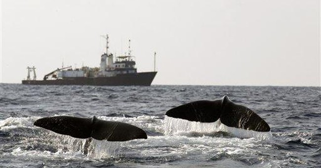 Mass. man punished for importing sperm whale teeth