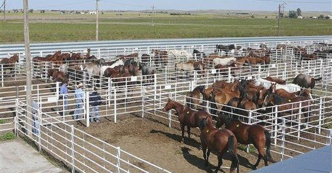NM meat plant owner defends horse slaughter plan