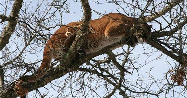 Boy, 6, injured in park in mountain lion attack