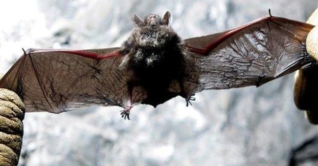 Deadly bat fungus in Missouri, farthest west yet