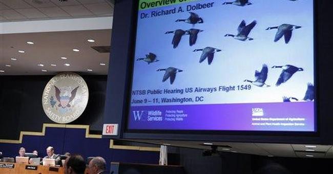 Birds hit vice president's plane while landing