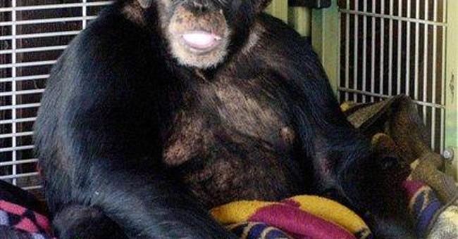 Conn. woman mauled by chimp awaits face transplant