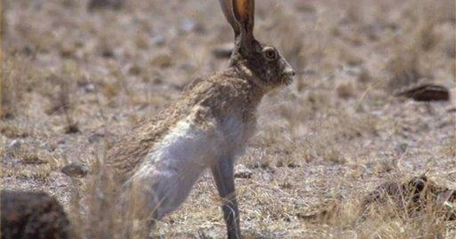 Texas drought could threaten endangered species