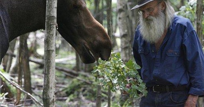 Vt. officials baffled: Where is moose's body?