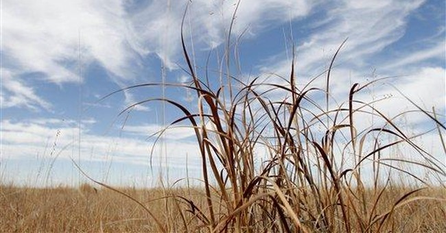 What Grows in a Drought? Government