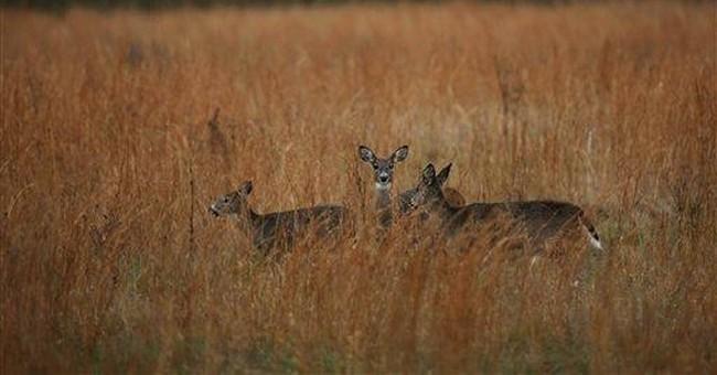 US judge OKs sharpshooters' Valley Forge deer hunt