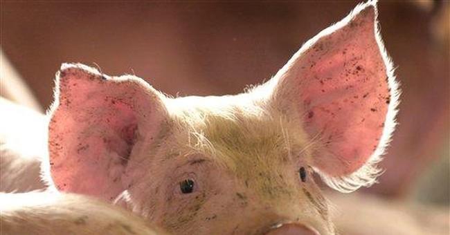 Pork, Anyone?