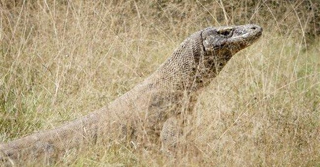 You Keep Your Gosh Darn Hands Off These Komodo Dragons, You Sidewinding Smugglers