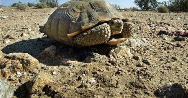 Environmental fight: Tortoises vs. solar energy