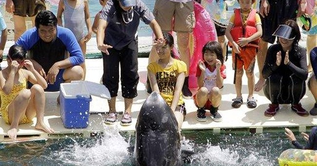 Japanese village kills dolphins but frees young