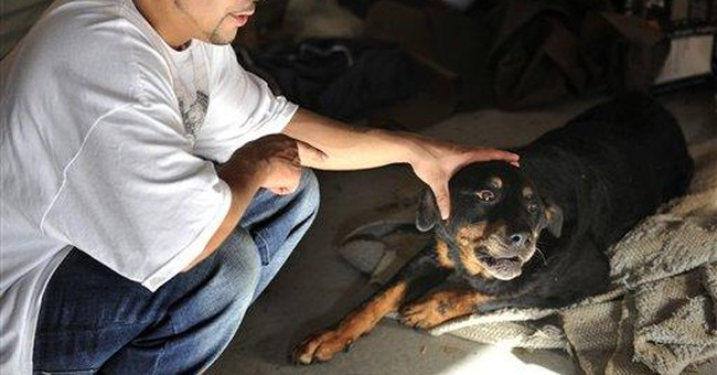 Dog gets new leash on life after euthanasia flub