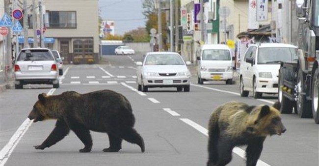 Japanese officials warn of spike in bear attacks