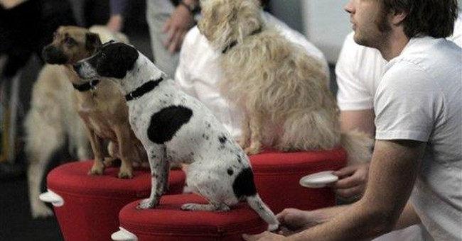OK Go turns 12 dogs and a goat into YouTube stars