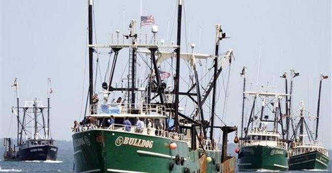 As species rebound, skippers bemoan 'underfishing'