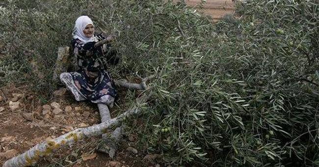 Palestinians, Jews race to plant West Bank