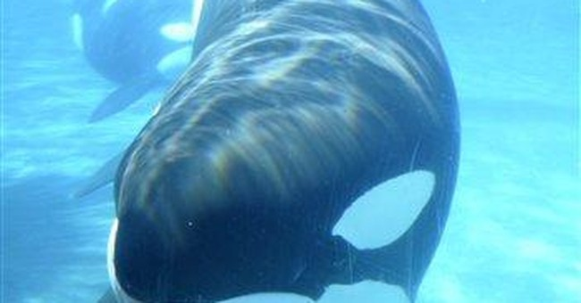 SeaWorld fights OSHA findings in trainer's death
