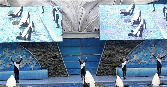 SeaWorld: Trainers to be back in water with whales