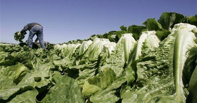 Hot Take Alert: Left Wing Publication Uses Romaine Lettuce Scare To Craft Anti-Gun Talking Point. Yes, It's Total Garbage