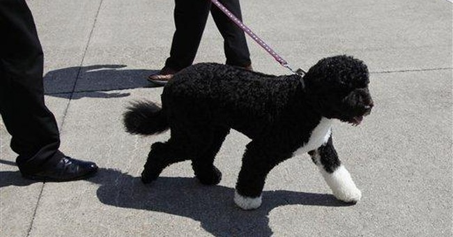 Man With Cache of Weapons Drove to DC to Steal Obama's Dog