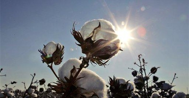 University President to Reach Out to Black Students After Cotton Controversy
