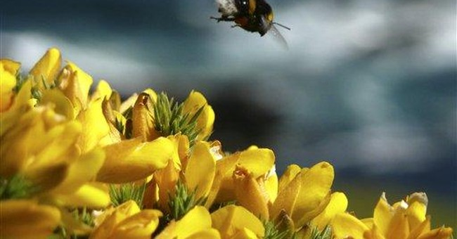 UK conservationists make a bee-line for the fields