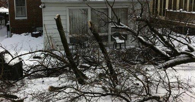 What to do, whom to call when a tree falls