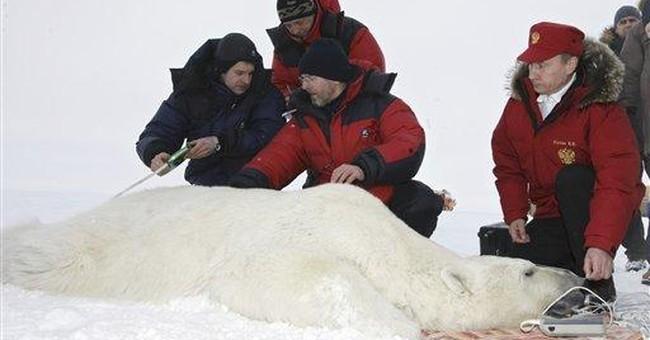 Russia bans endangered polar bear hunt this year