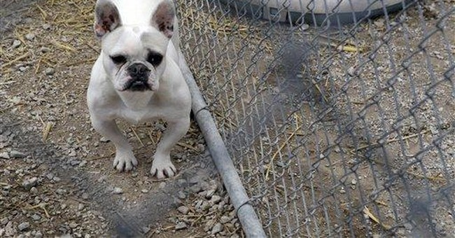 Mo. lawmakers overhaul law aimed at puppy mills
