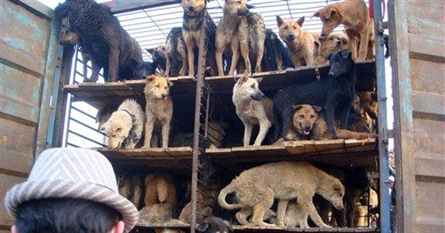 China dogs' rescue shows growing animal activism