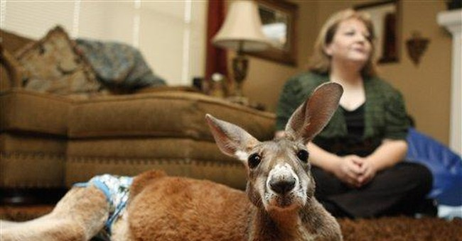 Anonymous donor buys insurance for Okla. kangaroo