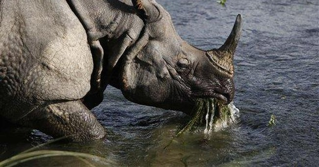 Nepal sees significant rise in rhino population
