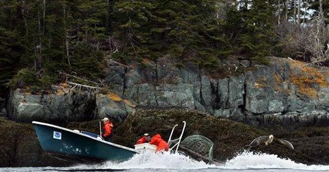New England harbor seal survey counts population