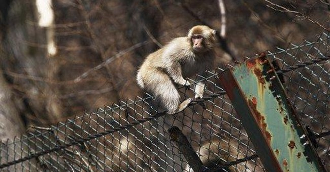 Tourists visiting Fukushima despite nuclear fears