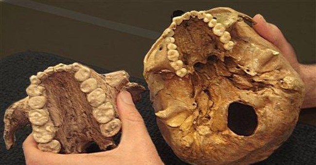 Study: Ancient 'Nutcracker Man' really ate grass