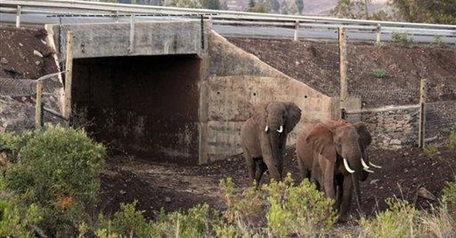Kenya: Elephants killed near Prince William cabin