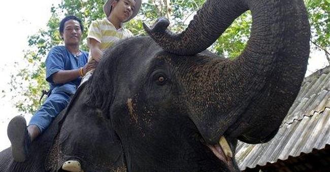 Elephant therapy program for Thai autistic kids