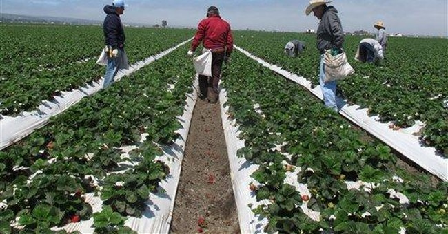 Neighbors oppose strawberry farms' fumigant use