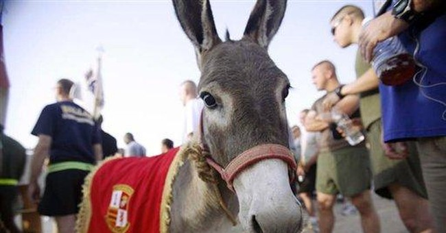 Operation Donkey brings Iraqi equine to US