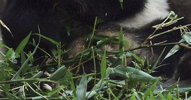 World's oldest panda dies in Chinese zoo at age 34