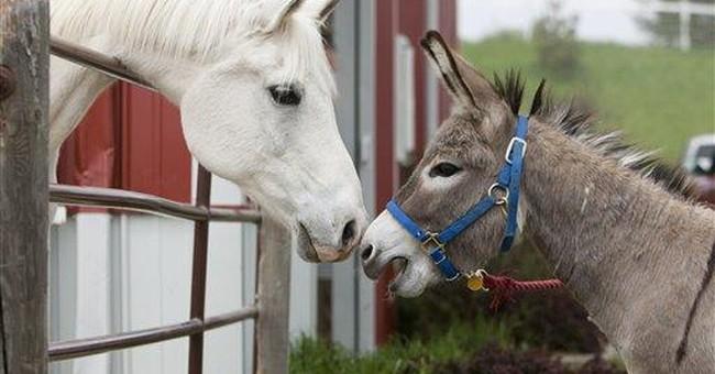 Iraq donkey named Smoke now at home in Nebraska