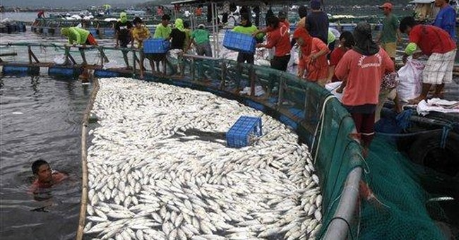 800 tons of fish die, rot on Philippine fish farms