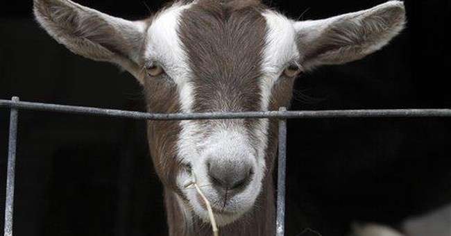 US goat dairies grow with demand for cheese