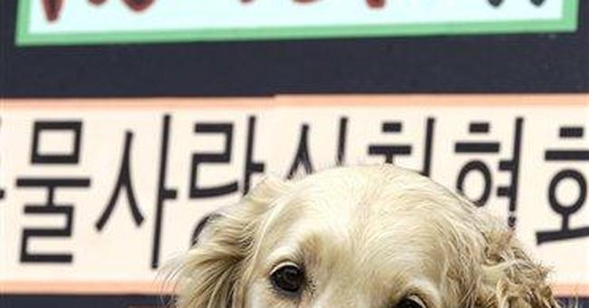 Seoul allows Fendi to feature fur in fashion show