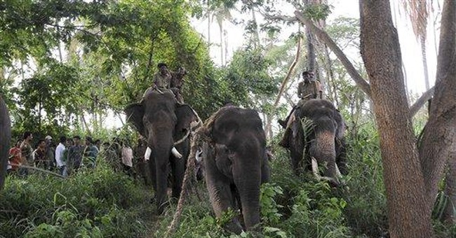 Elephant kills man during city rampage in India