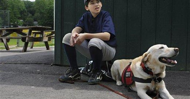 Special dogs track allergens to keep kids safe