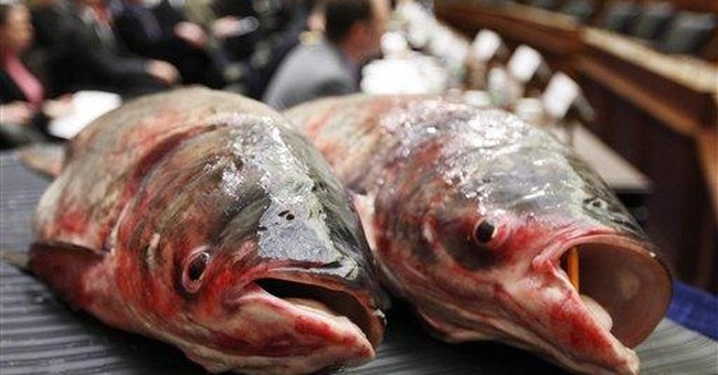 Mississippi flooding may have spread invasive fish