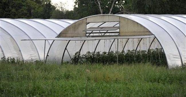 Germany still seeking reason for E. coli outbreak