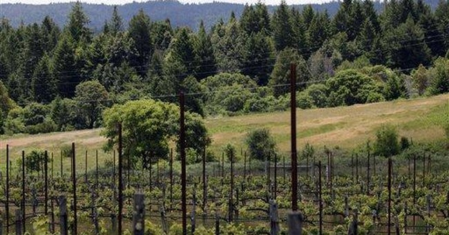 Plan to cut forest for vineyards faces opposition